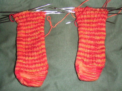 Socks, in larval stage