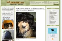 Molly makes stuffonmymutt.com