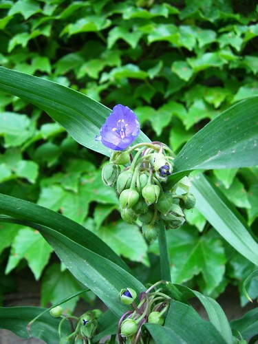Green-wood Cemetery Flower