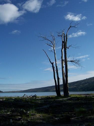 trees by wallowa lake