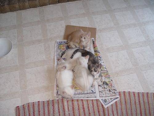 Kittens sleeping on newspaper