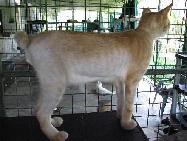GingerLongHairedBro_20070922_14x