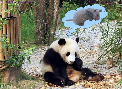 Giant Panda Baby-Dream of a Mother