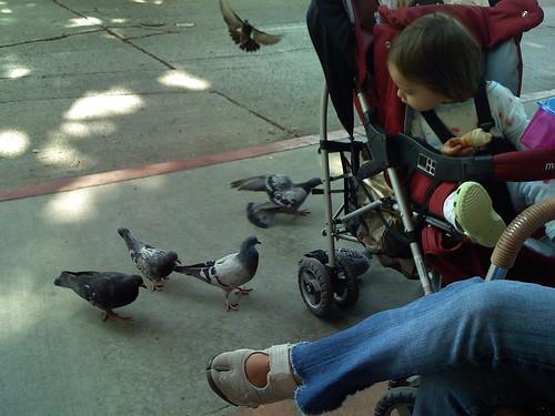 Six Pigeons