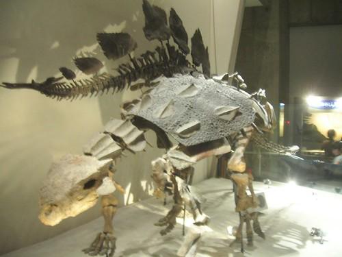 Ankylosaurio y Stegosaurio