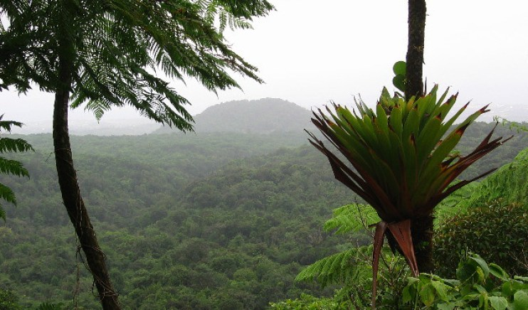 Guadalupa - Foresta tropicale