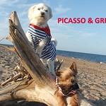 PICASSO & GRINGO