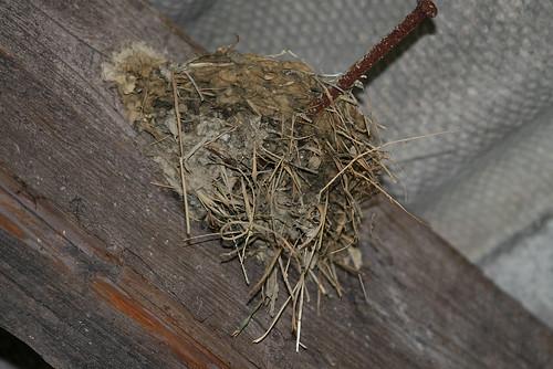 le nid des hirondelles