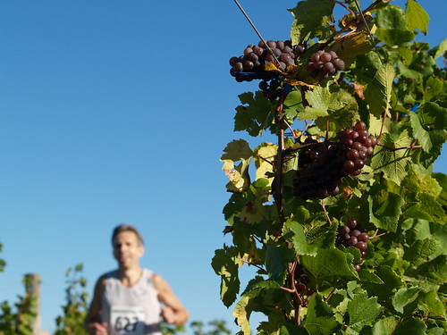 Run through the Vineyards by lpwines