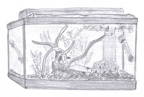 Fish tank - sketch, 18 June 2007