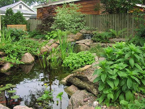 pond getting pretty