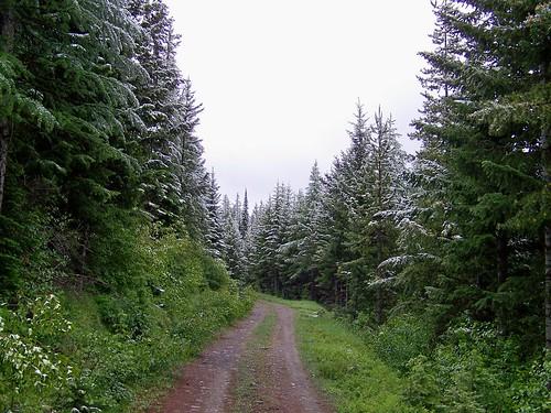 Mount Baldy FS road