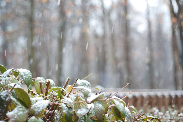 The first flakes of the season begin falling.