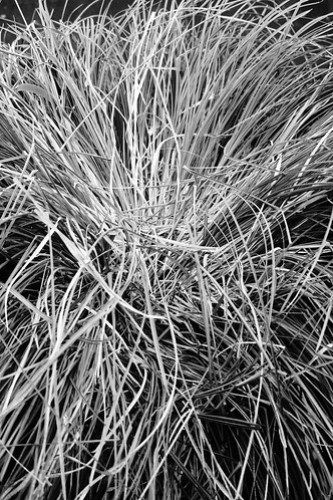 Grass Swirl Mono