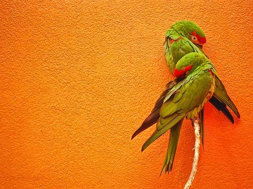Orange Wall. Parrots. Sleep.