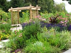 Community Garden 1