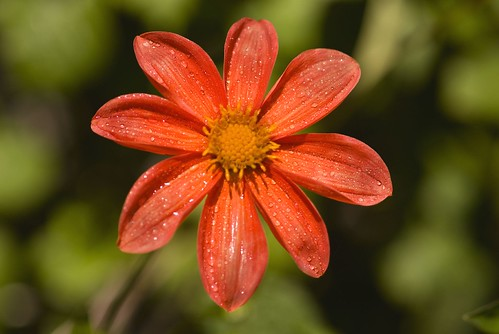 Using shallow depth of field for close-up photography