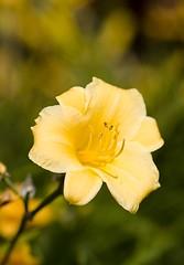 flower f/4