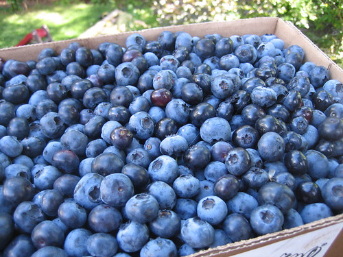 10 pounds of Blueberries