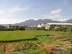 22.關渡平原的稻田與大屯山系 (1)