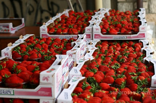 Crates of strawberries - Sagra della Fragola, Strawberry Festival in Italy