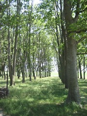 North grove of trees