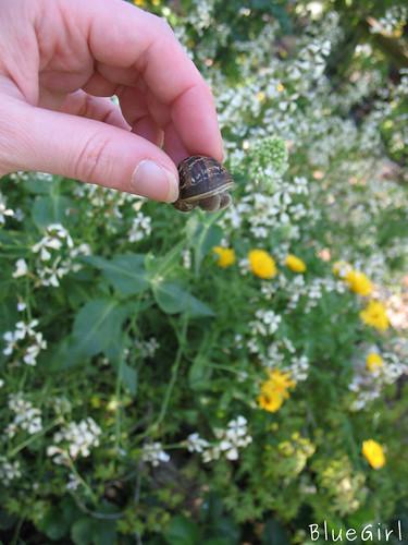 snails are jerks