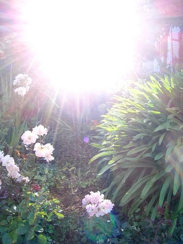 Sunny San Fran