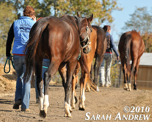 Turnout time at Days End Farm Horse Rescue