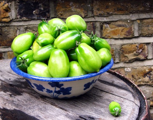My last tomato crop. Delish as fried green tomatoes, but still a disappointing harvest.