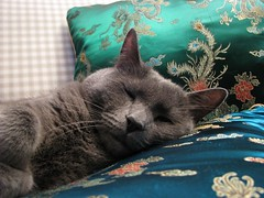 The Sleepy Prince
