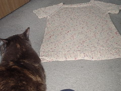 kitty and sweater
