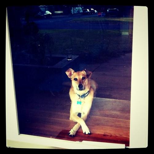 Ella keepin' an eye on the neighborhood