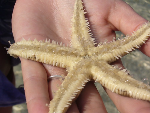 Upside Down Starfish