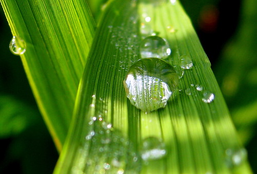 Image of dewdrops on a plant leaf