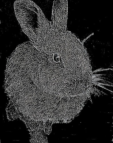 inverse selected rabbit