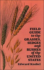 11901940_Grasses