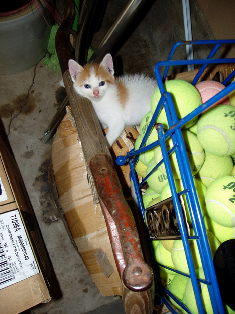Kitten & Shovel