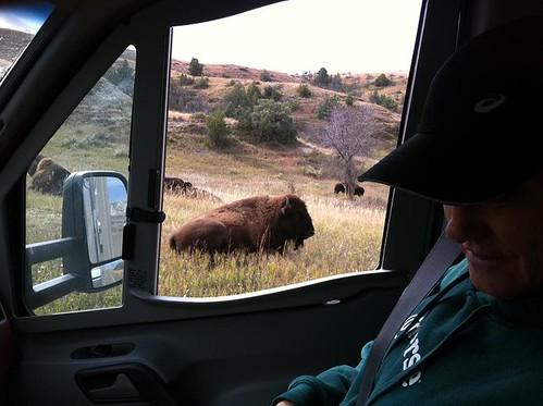 ND Teddy Roosevelt Nat'l Park Buffalo & Bruce 1
