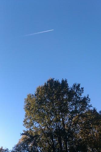 Backyard tree + airplane on autumn afternoon