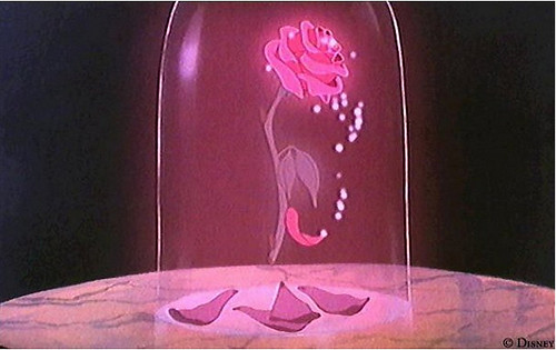 Beauty & The Beast Fairy Tale Cursed Countdown Rose