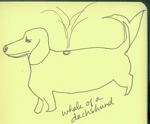 dachshund 3
