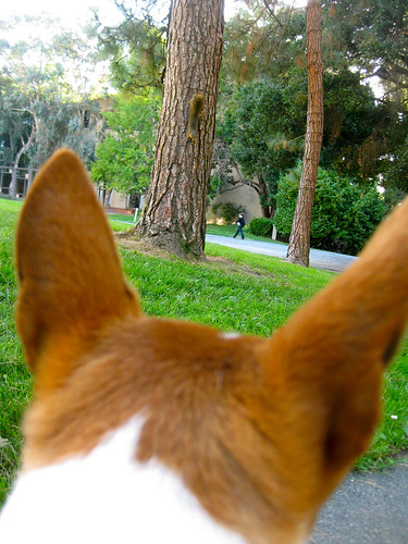 Bowpi stalks a squirrel on a tree