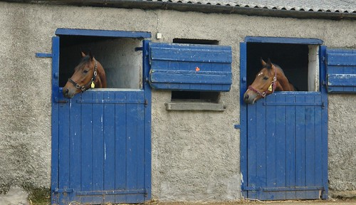 CharlesFred shot of horses and stable doors!