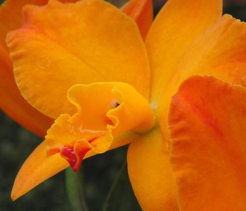 orchidglow