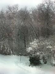 First Snowfall 2010
