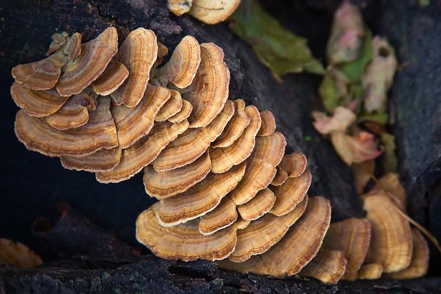 {297/365} mushrooms