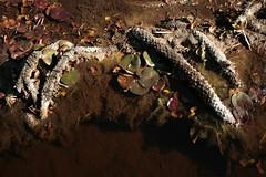 Petrified Tentacles