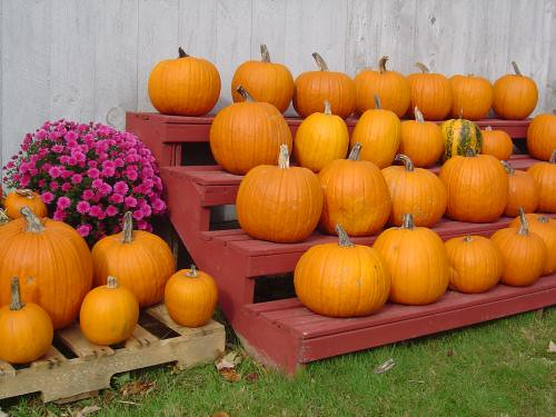 Pick your pumpkin
