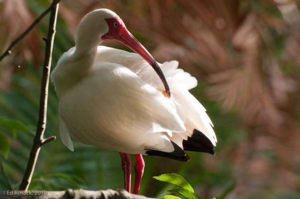 2. Nice light on an Ibis